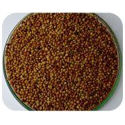 Sementes Calopog�nio - Caixa com 3,0 kg