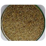 Sementes Azev�m Perene (PhD Ryegrass) - Caixa com 500 gr