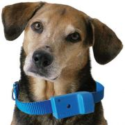 Coleira Anti-latido, Smart 2 Plus, Azul, Bateria p/ 6 meses, N�o maltrata o animal